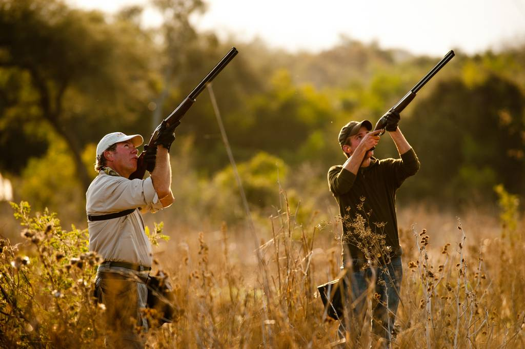 how to call doves for hunting