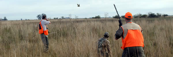 Partridge hunting